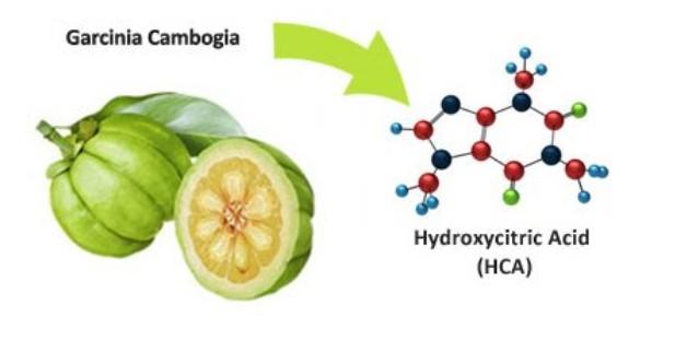 garcinia cambogia hydroxycitric acid